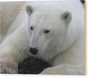 Ice Bear Wood Print