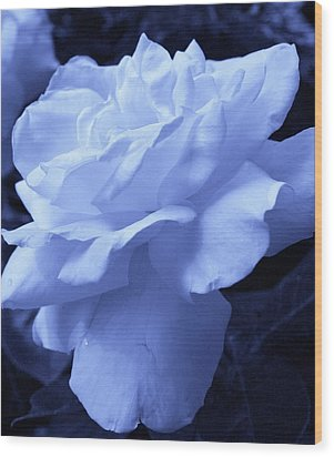 Ice Blue Rose Wood Print by Bruce Bley
