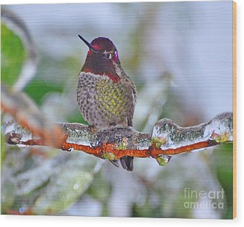 Wood Print featuring the photograph Ice Cold Hummer by Jack Moskovita