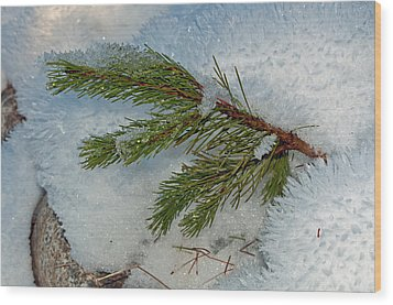 Ice Crystals And Pine Needles Wood Print by Tikvah's Hope