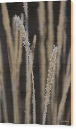 Wood Print featuring the photograph Ice Crystals On Tall Grass by Mick Anderson