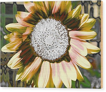 Iced Oatmeal Cookie Sunflower Wood Print by Devalyn Marshall