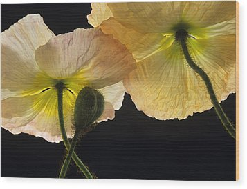 Iceland Poppies 2 Wood Print