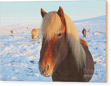 Wood Print featuring the photograph Icelandic Horse by Milena Boeva