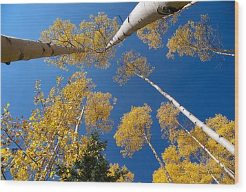 Iconic Aspen Photo Wood Print by Stephen  Johnson