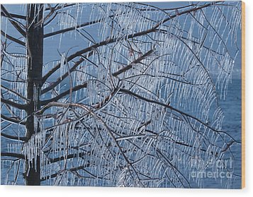 Icy Tree Wood Print by Charles Lupica