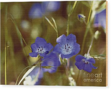 Wood Print featuring the photograph Idyllwild Baby Blue Eyes by Johanne Peale