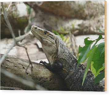 Iguana Wood Print by Juan Francisco Zeledon