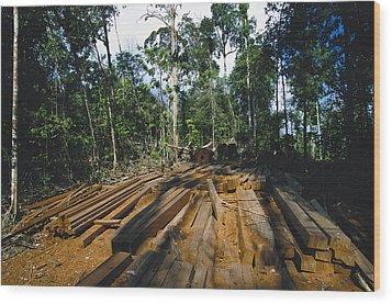 Illegal Logging Site, Felled Trees Wood Print by Tim Laman