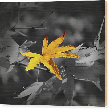 Illuminated Leaf Wood Print by Mikki Cucuzzo