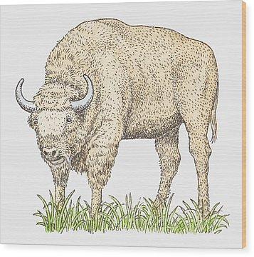 Illustration Of A Bison Wood Print by Dorling Kindersley