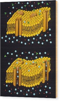 Illustration Of Ion Chanels In Plasma Membrane Wood Print by Francis Leroy, Biocosmos