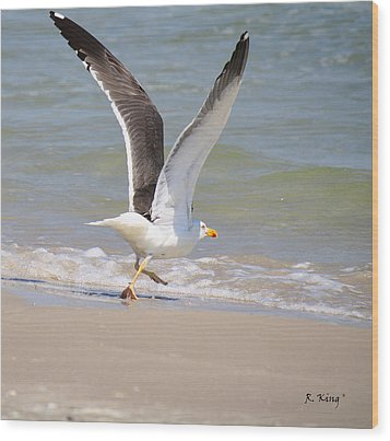 Im Out Of Here - Lesser Black-backed Gull Wood Print by Roena King
