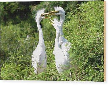 Immature Egrets Wood Print