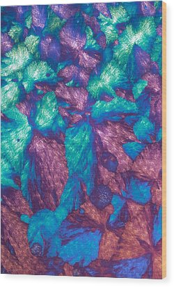 Immunoglobulin Crystals, Light Micrograph Wood Print by David Parker