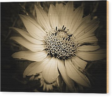 Imperfection Wood Print by Beth Akerman