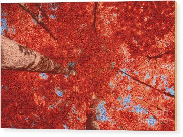 Impression Of Red Maple Wood Print by Charline Xia