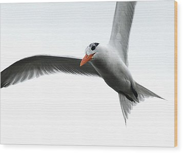 In Flight Wood Print by Kathy Gibbons