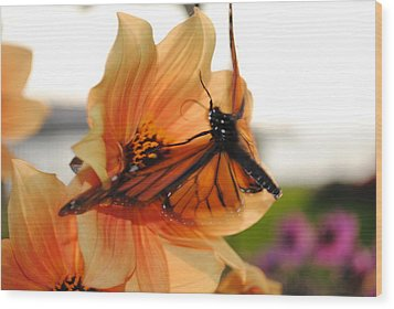 Wood Print featuring the photograph In Flight... by Michael Frank Jr