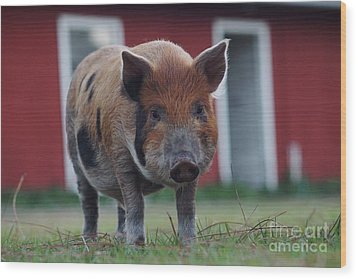 In Front Of The Red Barn Wood Print by Lynda Dawson-Youngclaus