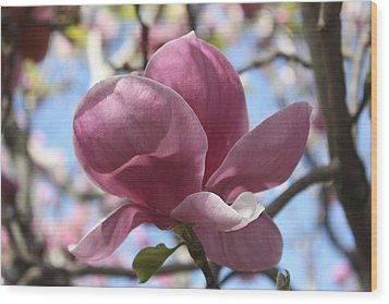 In Full Bloom Nb Wood Print
