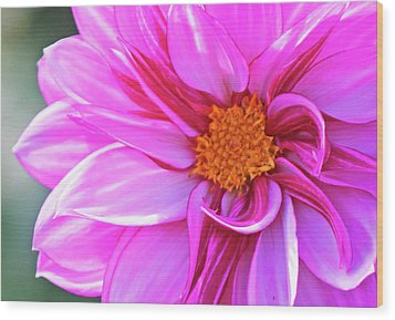 In Love With Pink Wood Print by Becky Lodes