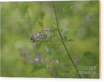 In The Garden Wood Print by Beve Brown-Clark Photography