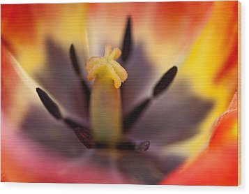 In The Heart Of Flower II Wood Print