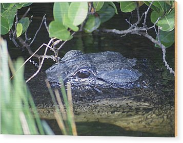 Wood Print featuring the photograph In The Swamp by Jerry Cahill