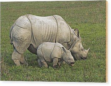Indian Rhinoceroses Wood Print by Tony Camacho