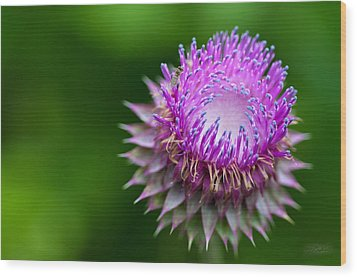 Indiana Purple Thistle Flower Wood Print by Melissa Wyatt