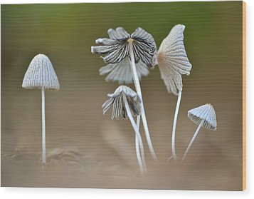 Wood Print featuring the photograph Ink-cap Mushrooms by JD Grimes