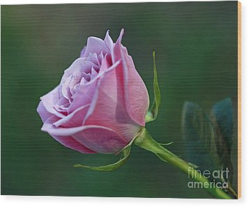 Innocence At Sunrise- Pink Rose Blossom Wood Print by Inspired Nature Photography Fine Art Photography