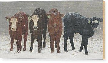 Inquisitive Calves Wood Print