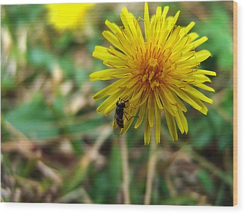 Insect On Flower Wood Print by Alessandro Della Pietra