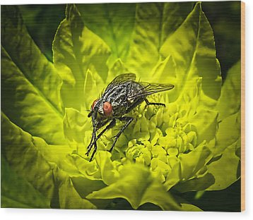 Insect Up Close - Summer Fly Sunbathing On A Yellow Perennial Garden Plant - Macro Photography Wood Print by Chantal PhotoPix