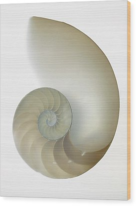 Inside Of Large White Nautilus Shell On White Wood Print by Rick Lew