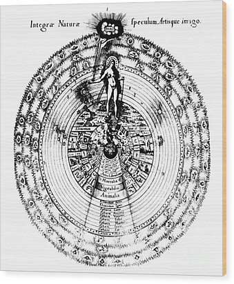 Integrae Naturae, 17th Century Wood Print by Science Source
