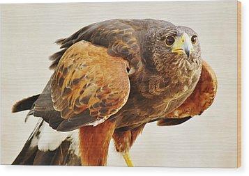 Intense Wood Print by Paulette Thomas