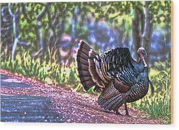 Intense Tom Turkey Display Wood Print by Gregory Scott