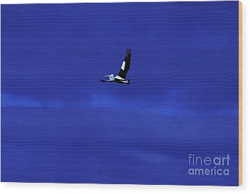 Wood Print featuring the photograph Into The Blue by Blair Stuart