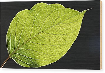 Intricacies Of A Leaf Wood Print by Mary McAvoy