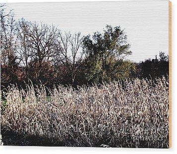 Iowa Cornfield Wood Print by Marsha Heiken