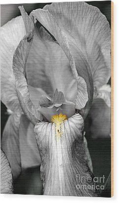 Iris - Bw Wood Print by Larry Carr