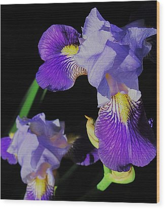 Iris-13 Wood Print by Todd Sherlock