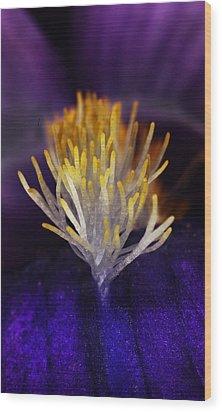 Iris Beard Wood Print by Charles Dana