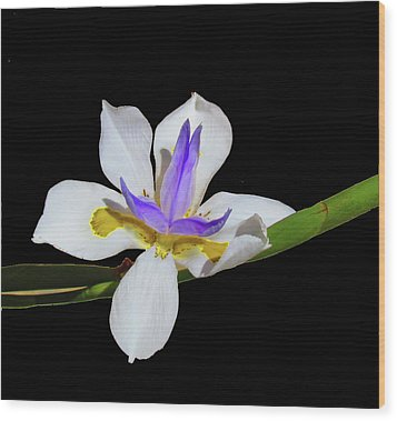 Iris Wood Print by Bonnie Muir