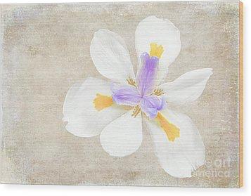 Iris Calling Wood Print