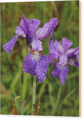 Iris Dew Wood Print by Coby Cooper