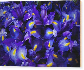 Iris Wood Print by Lynn Wohlers